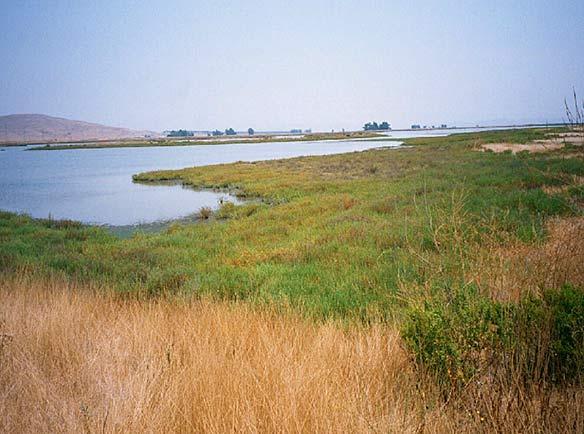Sonoma Baylands Wetland