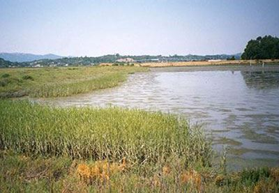 Sonoma Baylands Wetland Demonstration Project